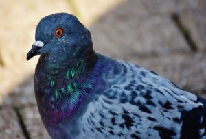How to prevent bird infestation